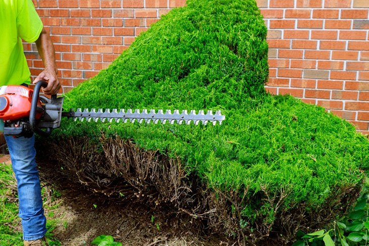 best petrol hedge trimmer long reach